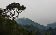 The wild and dense canopy of Bwindi Impentrable Forest, home to the critically endangered mountain gorilla,,Bwindi Impenetrable Forest, Uganda, Africa