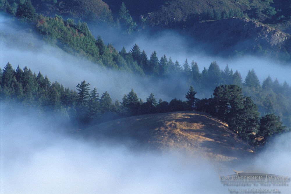 Coastal fog in morning over hills near Mount Tamalpais State Park, Marin County, California Coastal fog in morning and trees on the forest hillsides and ridges near Mount Tamalpais State Park, Marin California
