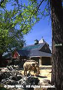 Elephant, Locust Tree, robina, Philadelphia Zoological Gardens, Philadelphia gardens and arboretums