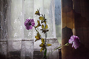 Artificial flowers in the flat of Ondrej Ziga (49) and his wife Janeta (41) - they both have together 8 children and are living in a building at Lunik IX, a decrepit housing complex almost entirely populated by Roma.