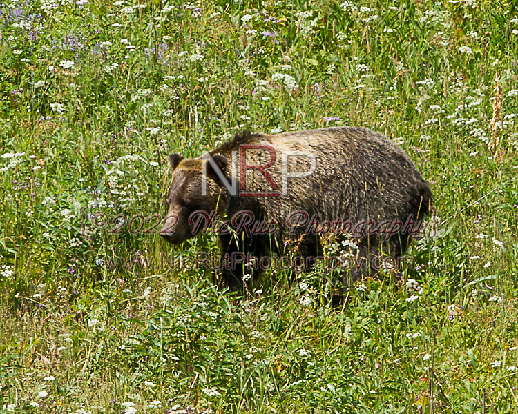 August 9, 2014: Yellowstone National Park Vacation 2014 - Day 7