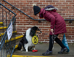 Lucca the rough collie arrived at a polling station in Clarkson, Glasgow with her owner Charlotte McKechnie to vote.<br /> <br /> © Dave Johnston / EEm