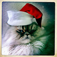 Juma, my baby before Quinn was born, came to me as a Christmas gift almost five years ago. He poses here last December with the Santa hat he came with.