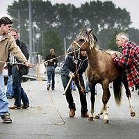Nederland.Utrecht.Veemarkt.27 juli 2005.<br /> Paarden worden verhandeld tijdens de Paardenmarkt op de Veemarkt.Onrustig dier.Paardenhandel. Boeren.<br /> Horse market in Utrecht in 2005. Resisting horse.