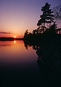 White pines reflected in Nym Lake, Quetico Provinicial Park, Ontario, Canada.