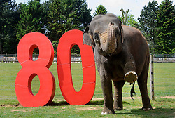 © under license to London News Pictures.  23.05.11.Twenty-nine year old Asian elephant Kaylee.celebrates Whipsnade Zoo's 80th Birthday. The zoo first opened on May 23rd 1931.