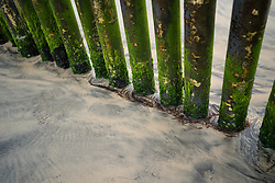 Seaweed grows on the wall that divides the US and Mexico at the Tijuana border.
