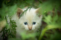 """This kitten mysteriously found his way to my doorstep.  And yes, I realize """"pixel"""" isn't the most unique name for a photographer's cat"""