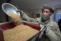 M. Sarwar pours barley into the mill scoop attached to a system that can alternate between a micro hydro generator and the mill.  NCA supported the construction of this system. Dara-e-Foladi Village,, Bamyan Province, Afghanistan