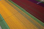 Nederland, Flevoland, NOP, 28-04-2010; bloembollenvelden in de Noordoostpolder, omgeving Creil, voornamelijk tulpen en narcissen. De polder is een relatief jonge bollenstreek, gekenmerkt door grootschalige teelt. .Flower fields in the Northeast Polder, mostly tulips and daffodils. The polder is a relatively young bulb region, and can be characterized by its widespread cultivation..luchtfoto (toeslag), aerial photo (additional fee required).foto/photo Siebe Swart
