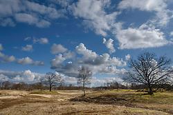 Larens wasmeer, Hilversum, Netherlands