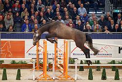 268, V-Kungfu SF Z<br /> KWPN Stallionshow - 's Hertogenbosch 2018<br /> © Hippo Foto - Dirk Caremans<br /> 31/01/2018