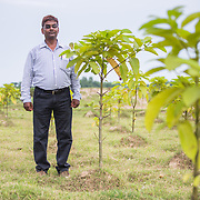 CAPTION: DESI Power's Deepak Das shows just how much, relative to his own height, one of the types of tree the company uses for biomass can grow in only a few weeks. LOCATION: Beherbari, Araria District, Bihar, India. INDIVIDUAL(S) PHOTOGRAPHED: .