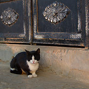 Cat laps up the last rays of the day. Dahab Island, Cairo.