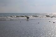 Fisherman with net stalking catch of fish Pasikudah Bay, Eastern Province, Sri Lanka, Asia