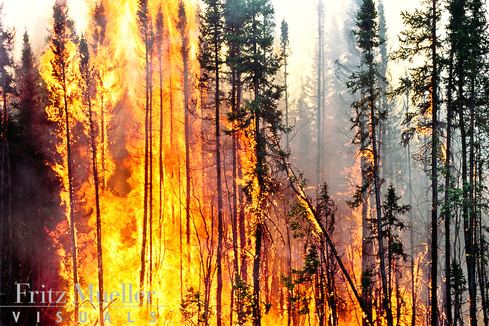 Wildfire consumes the boreal forest in central Yukon