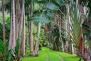Waipio Valley, Big Island of Hawaii