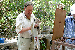 Roger Griffin With Deceased Toque Macaque