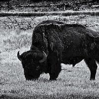 Teton/Yellowstone '13<br />edited 10/05/13<br />converted to B&W 10/05/13