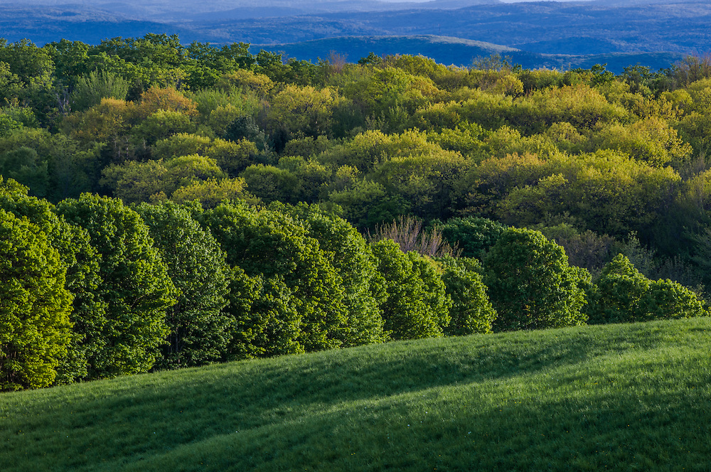 Rolling hills and fields, patterns of trees in spring greens, Acworth, NH