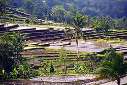 23.07.2014, Bali, IDN, Natur und Sehenswuerdigkeiten in Indonesien, im Bild die beruehmten Reisterassen von Jatiluwih, Bali, Indonesien. EXPA Pictures © 2014, PhotoCredit: EXPA/ Eibner-Pressefoto/ Schulz<br /> <br /> *****ATTENTION - OUT of GER*****