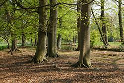 Hilverbeek,  's-Graveland, Wijdemeren, Noord Holland, Netherlands