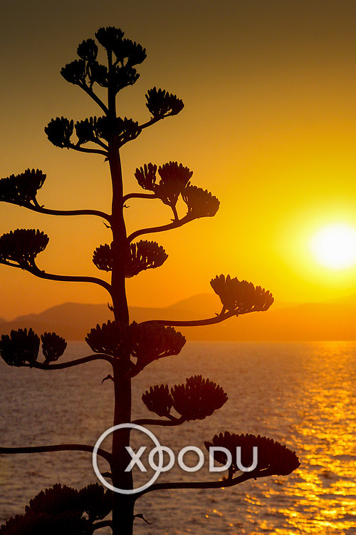Tree branches silhouetted by sunset over water (Hydra town, Greece - Jun. 2008) (Image ID: 080622-2033471a)