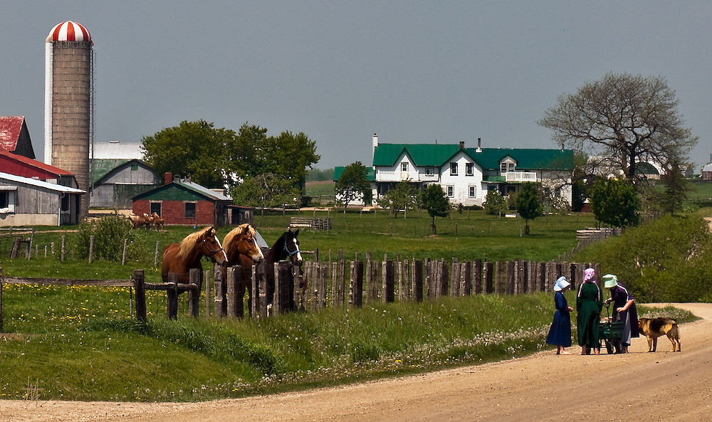 Menonite girls stop to put on their shoes on a stony road under the watchful eye of draft horses.