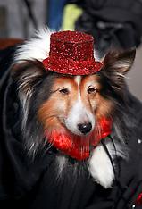 Barkus Dog Parade 2015