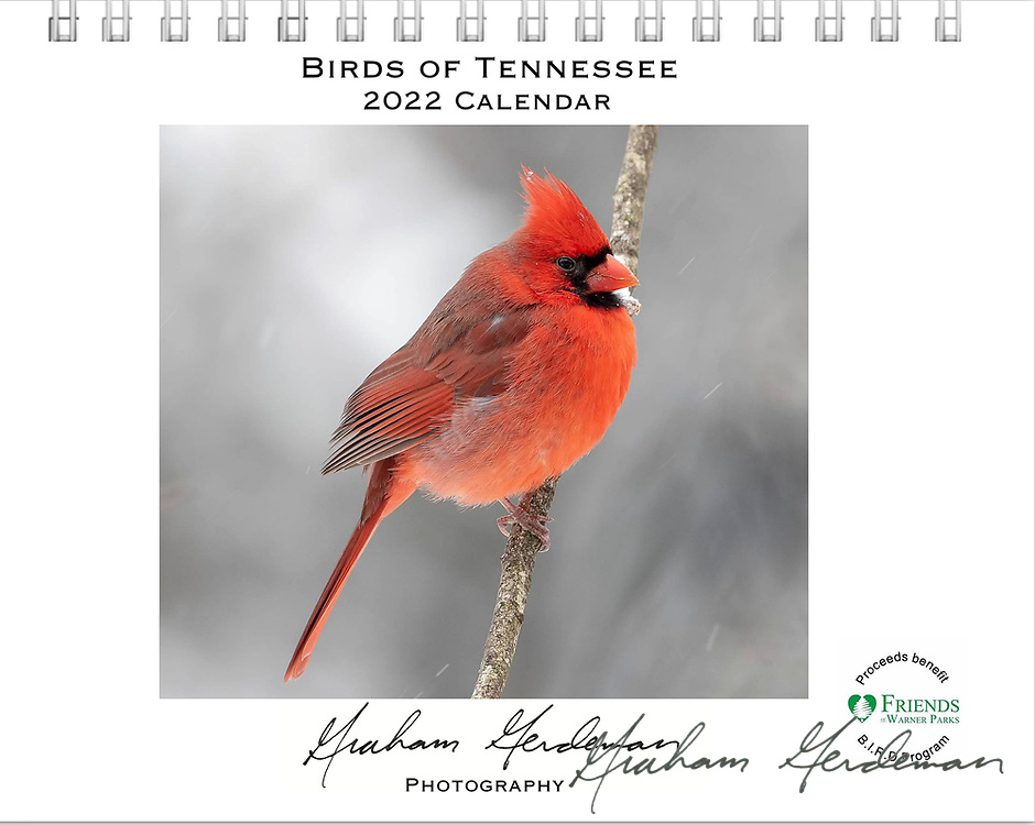 """2022 Birds of Tennessee Calendar<br /> _____<br /> <br /> Featuring 12 months of birds of the great state of Tennessee. All of the birds depicted are either Summer or Winter residents in Tennessee, or are at least annual migrants in Spring and Fall. <br /> <br /> At least 50% of the profits of this annual calendar will go to the B.I.R.D. Research program at Warner Park Nature Center in Nashville, funded through Friends of Warner Parks, a 501(c)(3) nonprofit organization (warnerparks.org).<br /> <br /> Currently also available locally in Nashville at the Wood Thrush Shop and Shelby Bottoms Nature Center, in conjunction with my """"Our Vanishing Birds"""" photo exhibit on display there."""