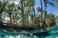 Sunburst through trees with boardwalk, viewing platform and submerged tree roots. Horizontal orientation split image. Three Sisters Springs, Crystal River National Wildlife Refuge, Kings Bay, Crystal River, Citrus County, Florida USA.