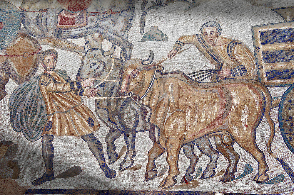 Bulls pulling a wagon from the Ambulatory of The Great Hunt, room no 28,  at the Villa Romana del Casale,  first quarter of the 4th century AD. Sicily, Italy. A UNESCO World Heritage Site. .<br /> <br /> If you prefer to buy from our ALAMY PHOTO LIBRARY  Collection visit : https://www.alamy.com/portfolio/paul-williams-funkystock/villaromanadelcasale.html<br /> Visit our ROMAN MOSAICS  PHOTO COLLECTIONS for more photos to buy as buy as wall art prints https://funkystock.photoshelter.com/gallery/Roman-Mosaics-Roman-Mosaic-Pictures-Photos-and-Images-Fotos/G00008dLtP71H_yc/C0000q_tZnliJD08