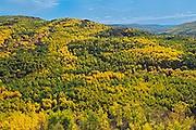 Colorful autumn foliage in hills <br /> Peace River <br /> Alberta<br /> Canada<br /> Peace River <br /> Alberta<br /> Canada