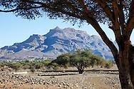 Jebel Kissane mountain with Acacia trees, Agdez, Draa valley, Morocco.