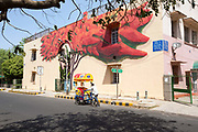 A street vendor passes The Lava Tree by artist Anpu Varkey on display in the Lodhi Colony area of New Delhi  designated Indias first ever public art district.