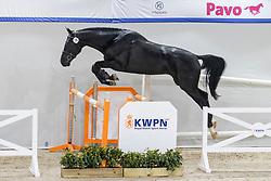 078, Normann<br /> KWPN Hengstenkeuring 2021<br /> © Hippo Foto - Dirk Caremans<br />  02/02/2021
