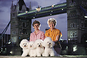 (1992) Four bichon-frise show dogs at tower bridge in London with their owners. The dogs pedigrees and paternity were proved by DNA fingerprinting.  DNA Fingerprinting. MODEL RELEASED.
