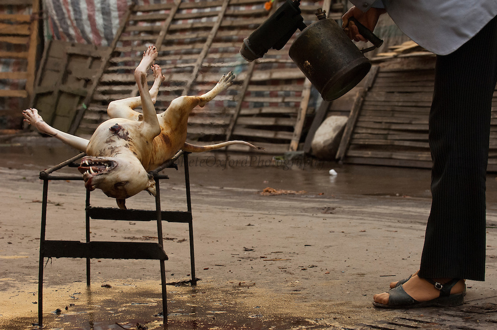 Butchered dog for eating. They are not skinned but the hair is taken off with boiling water then the skin is torched before the meat is either cooked over coals or boiled.<br /> Yuanyang, Honghe Prefecture, Yunnan Province. CHINA