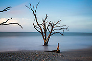 Early morning light over the boneyard beach at Botany Bay in Edisto Island, South Carolina. The Atlantic Ocean has slowly consumed the coastal forest through natural erosion leaving behind carcasses of dead trees.
