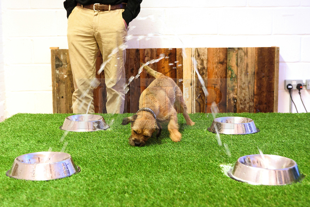 © Licensed to London News Pictures. 20/08/2016. Dog enjoying artwork titled 'Watery Wonder' by DOMINIC WILCOX.  The world's first art exhibition for dogs was created by artist DOMINC WILCOX is part of the MORE THAN's #PlayMore campaign, encouraging owners to spend more time playing with their pets.  London, UK. Photo credit: Ray Tang/LNP