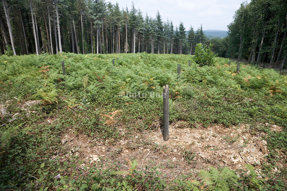 reforesting a cleared patch of woodland