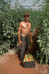 Man working in greenhouse near Havana Cuba standing near box of tomatoes grown for the tourist market,
