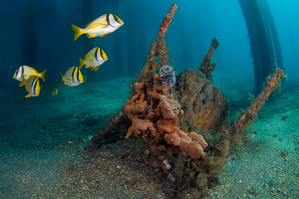 Garbage and man-made debris, fishing line and litter scattered along the bottom of Palm Beach County, FL reefs and intracoastal waterways.