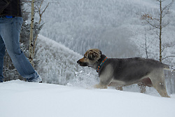 dog following a man in the snow covered mountains of Santa Fe