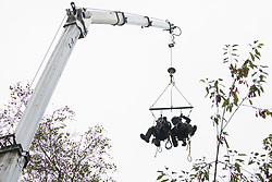 Enforcement agents from the National Eviction Team (NET) use a cherry picker as they commence works to evict environmental activists opposed to the HS2 high-speed rail link from Wendover Active Resistance (WAR) camp on 10th October 2021 in Wendover, United Kingdom. WAR camp, which contains tree houses, tunnels, a cage and a 15-metre tower, is currently the largest of the protest camps set up by Stop HS2 activists along HS2's Phase 1 route between London and Birmingham.