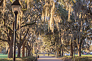 Live Oak tree tunnel in Forsyth Park Savannah, GA.
