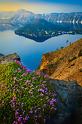 Wildflowers at rim of Crater Lake, Oregon, at sunset