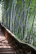 """Bamboo trees and a stone stairway are seen in the Bamboo Sea in Yibin, August 06, 2014.<br /> <br /> Shunan Bamboo Sea (Chinese: 蜀南竹海;pinyin: shǔnánzhúhǎi) covers an area of over 120 kilometers in Sichuan Province.<br /> This forest has won its fame for its unique green and graceful trees: bamboos are here, there and everywhere.<br /> It is one of the shooting places of the Oscar award- winning movie """"Crouching Tiger, Hidden Dragon"""" directed by Ang Lee.<br /> <br /> © Giorgio Perottino"""