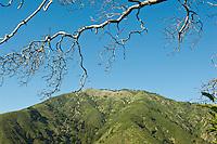 Pine Ridge Trail scenic, Big Sur, California.