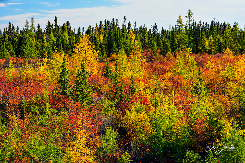 Taiga landscape in early autumn, Arctic Haven Lodge, Nunavut, Nunavut, Canada